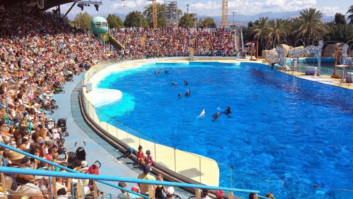 Show z delfinami w Marineland