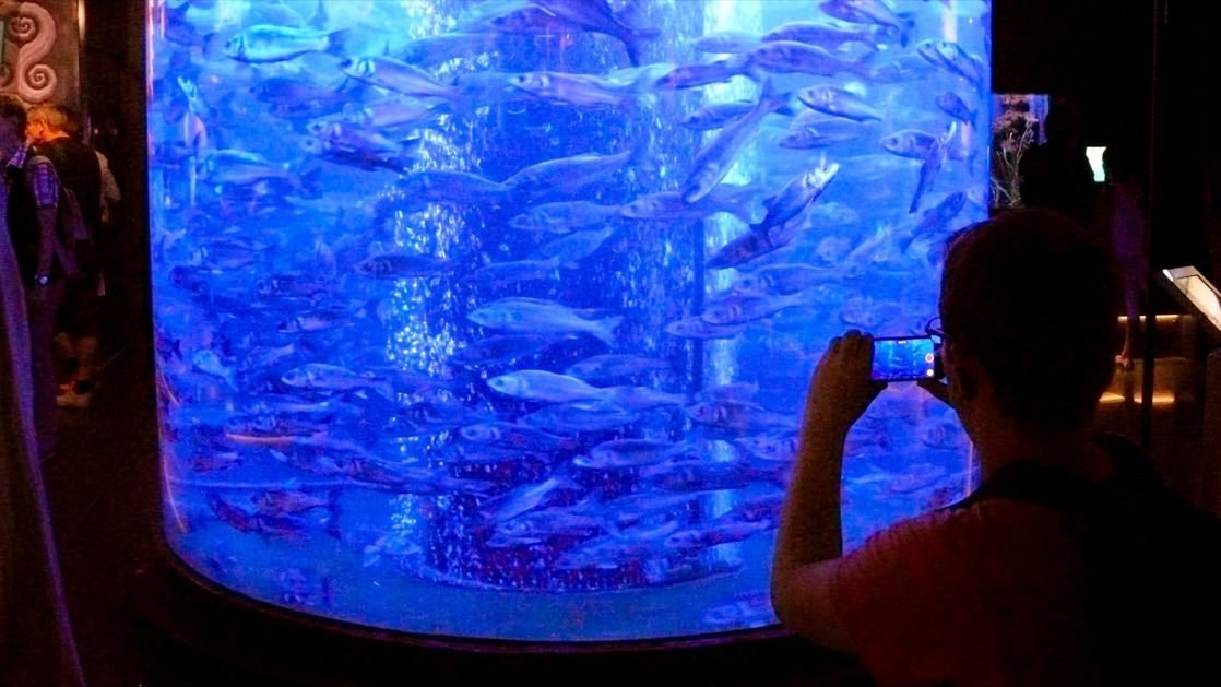 Jedno z akwariów w oceanarium w Monako