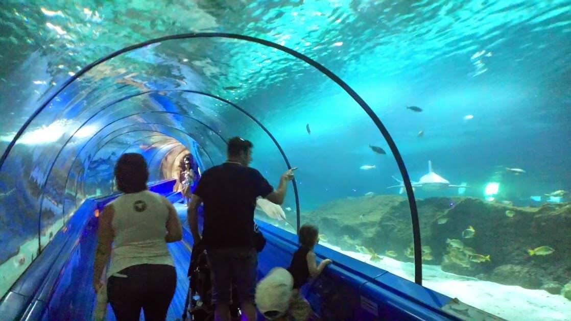 Tunel w akwarium z rekinami w Marineland Antibes