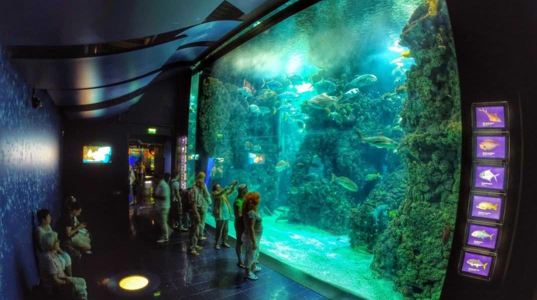 Laguna rekinów w Oceanarium w Monaco