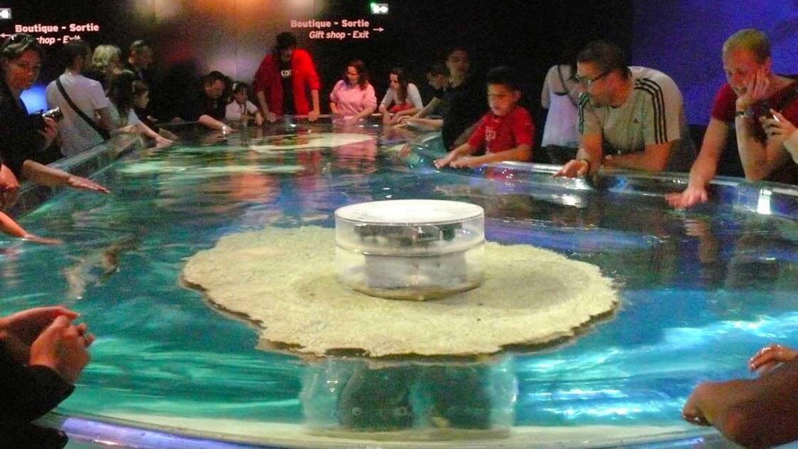 Oceanarium Monaco: zbiornik z rekinami, które można głaskać