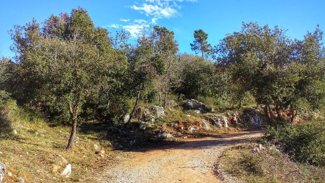 Ścieżka spacerowa w parku krajobrazowym