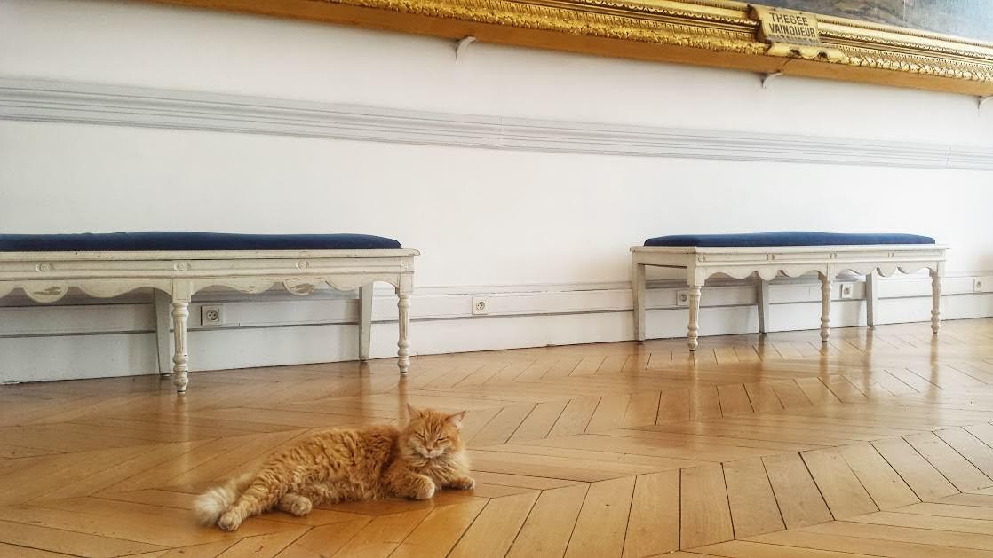 Rudy kot to stały mieszkaniec muzeum ;-)