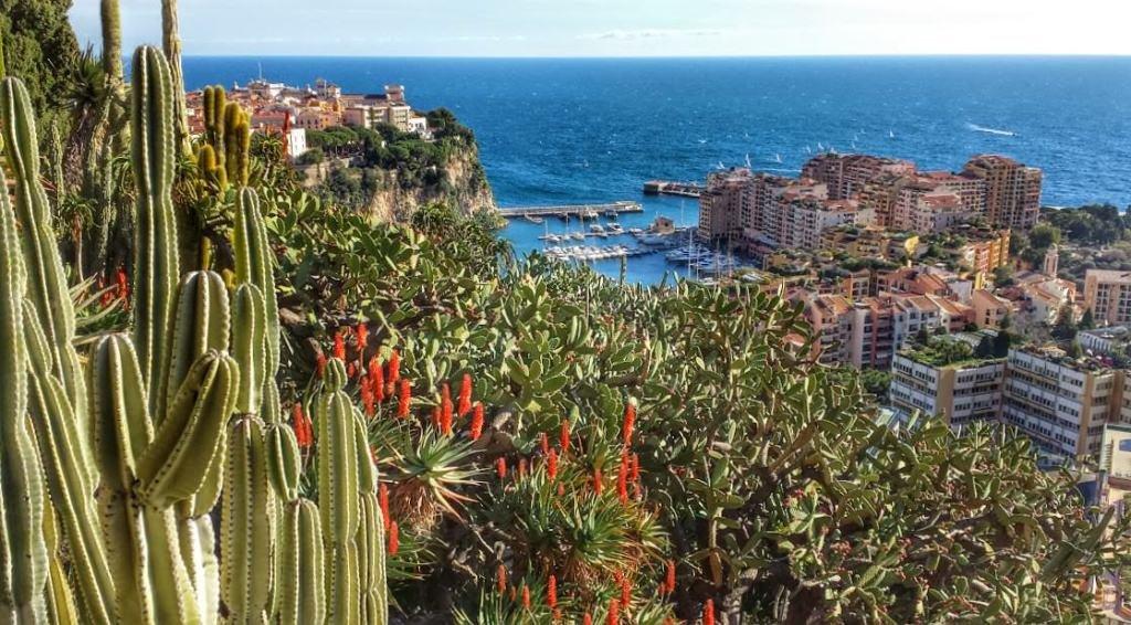 Ogród egzotyczny w Monaco, widok na Stare Miasto i dzielnicę Fontvieille