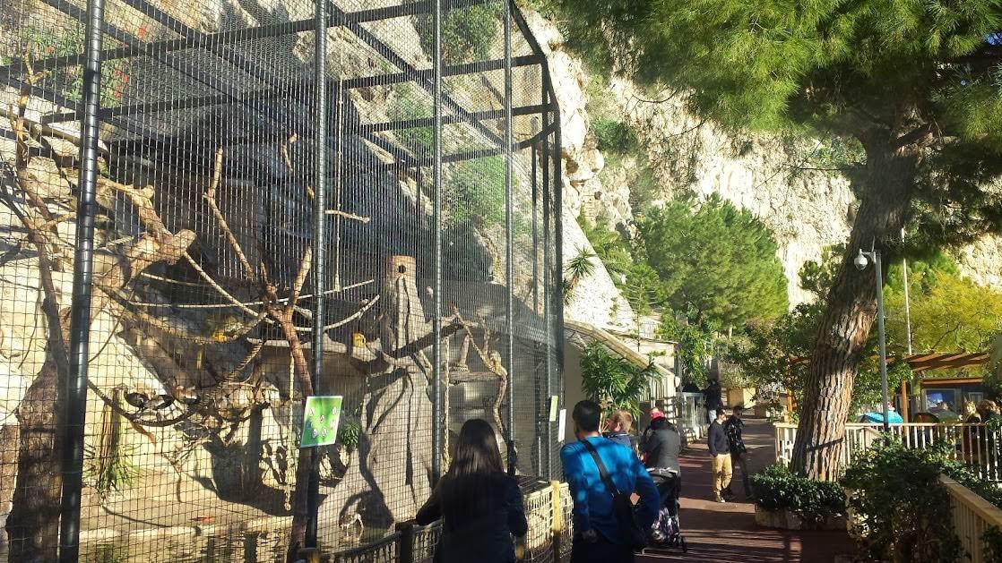 Ogr d zoologiczny monako atrakcje przewodnik informacje for Jardin animalier monaco