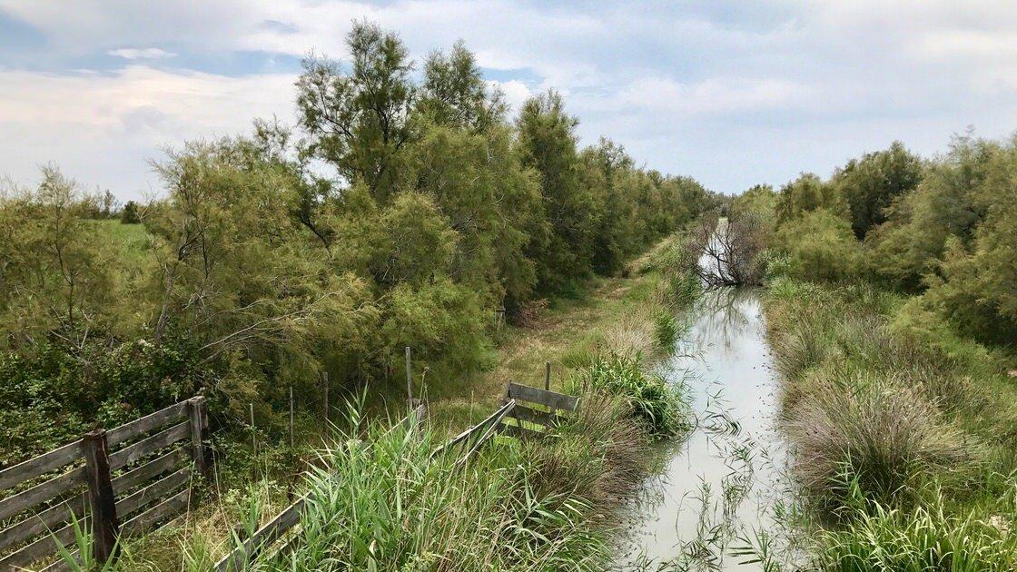 Rezerwat przyrody Camargue we Francji