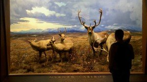 Amerykańskie Muzeum Historii Naturalnej, Nowy Jork