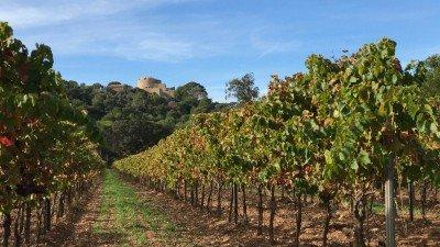 Wyspa Porquerolles, winnica i fort