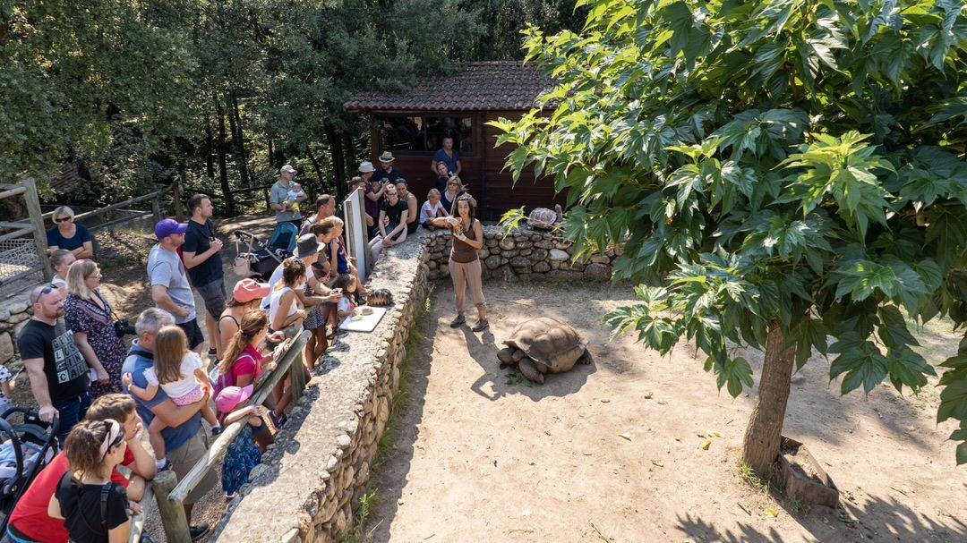 A cupulatta, rezerwat żółwi na Korsyce